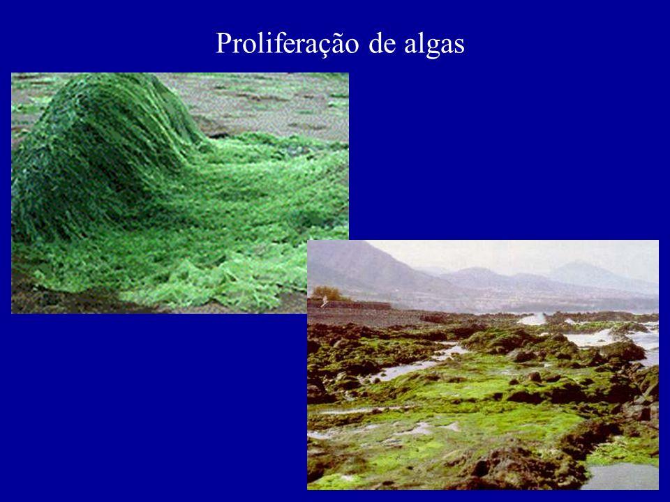 Proliferação de algas