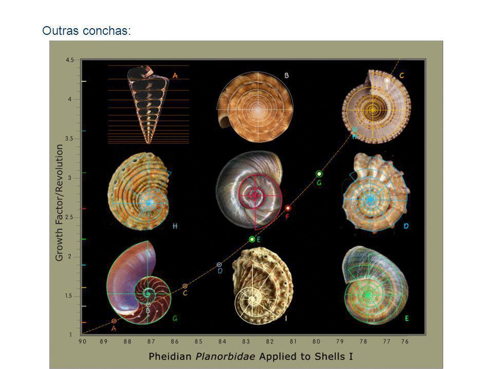 Outras conchas: