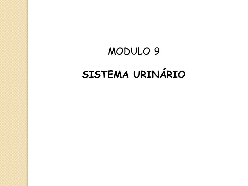 MODULO 9 SISTEMA URINÁRIO