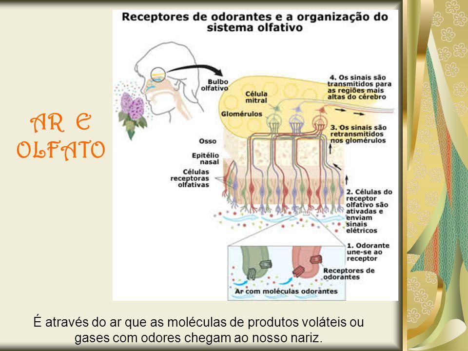 AR E OLFATO É através do ar que as moléculas de produtos voláteis ou gases com odores chegam ao nosso nariz.