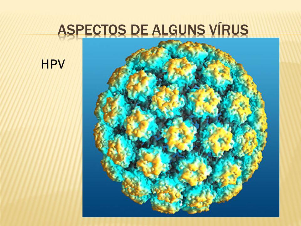 Aspectos de alguns vírus