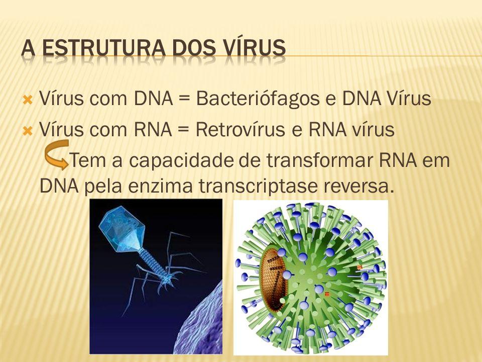 A ESTRUTURA DOS VÍRUS Vírus com DNA = Bacteriófagos e DNA Vírus