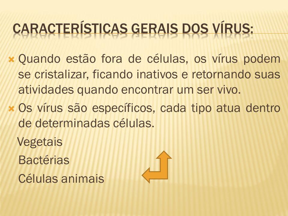 Características gerais dos vírus: