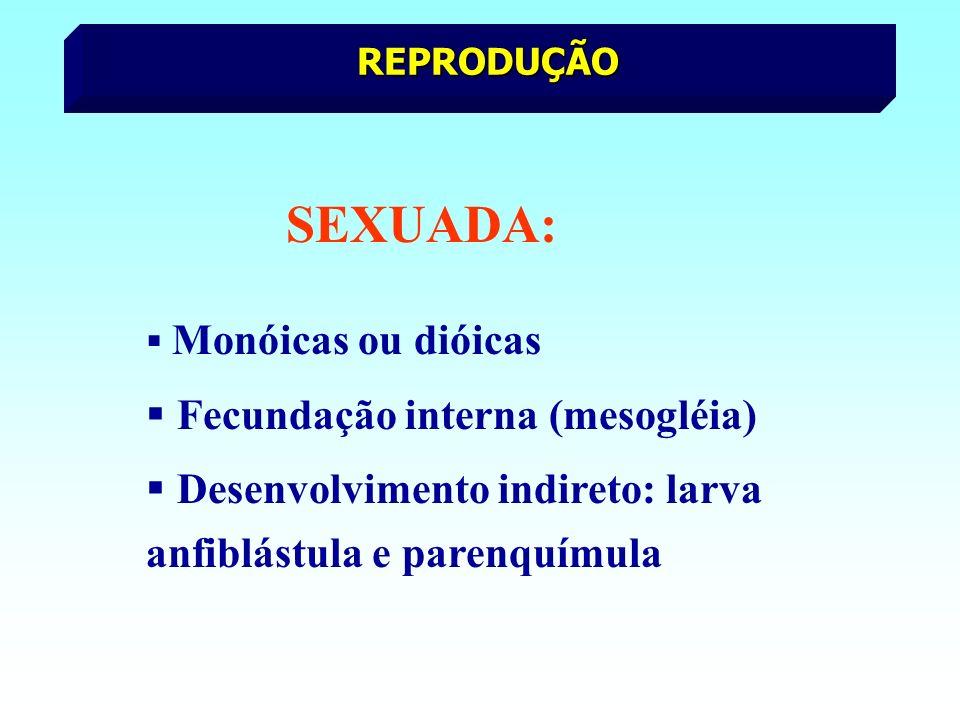Fecundação interna (mesogléia)