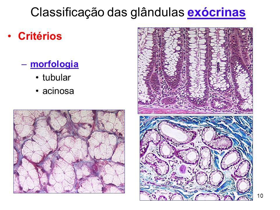 Classificação das glândulas exócrinas