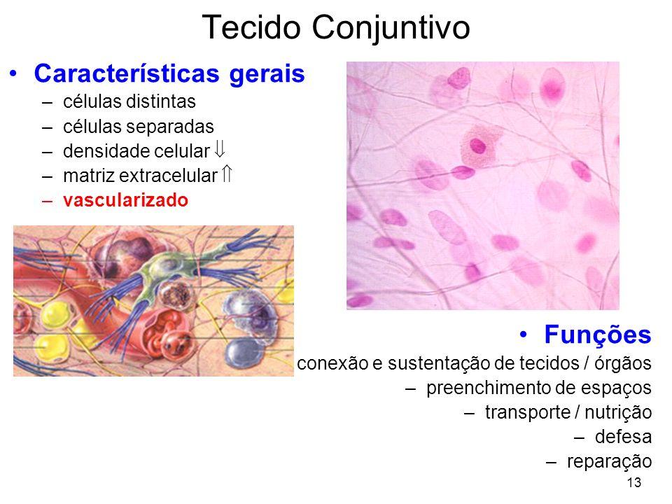 Tecido Conjuntivo Características gerais Funções células distintas