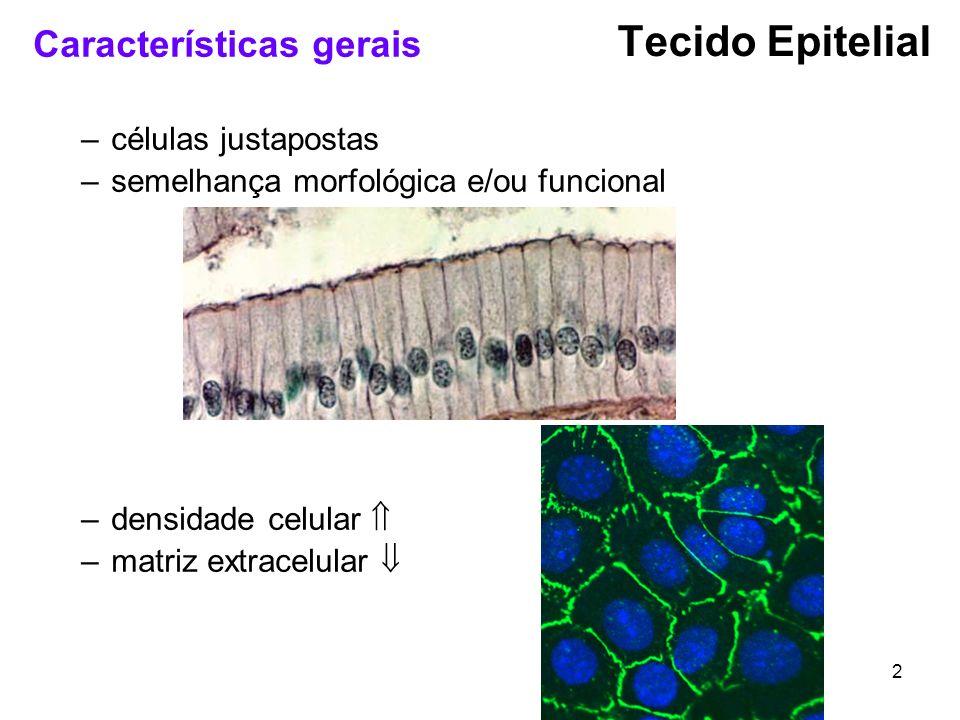 Tecido Epitelial Características gerais células justapostas