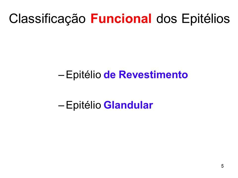 Classificação Funcional dos Epitélios