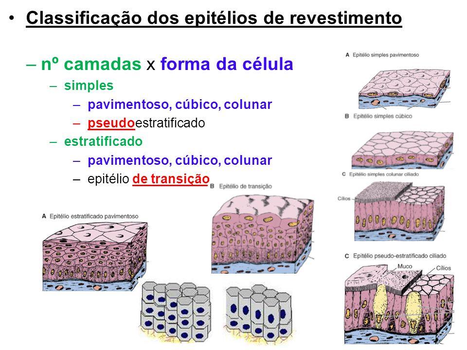 Classificação dos epitélios de revestimento