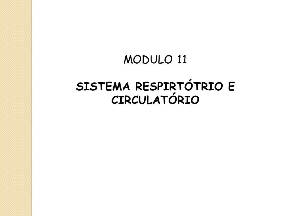 SISTEMA RESPIRTÓTRIO E CIRCULATÓRIO