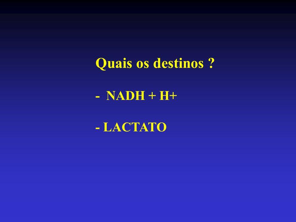 Quais os destinos - NADH + H+ - LACTATO