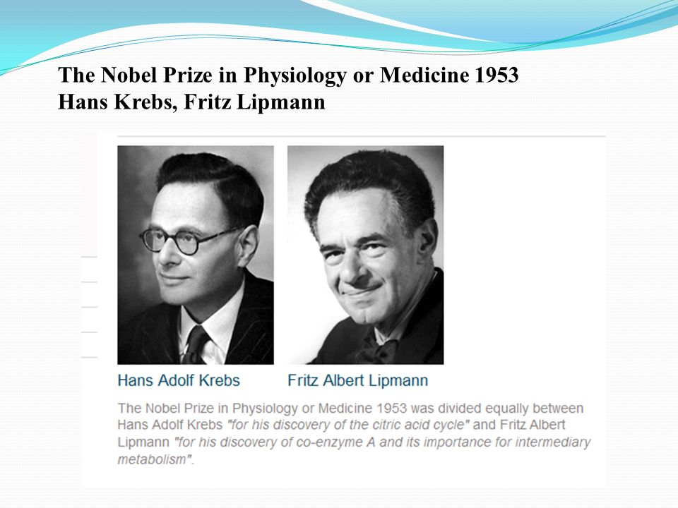 The Nobel Prize in Physiology or Medicine 1953