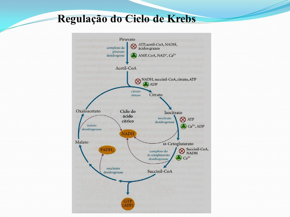 Regulação do Ciclo de Krebs