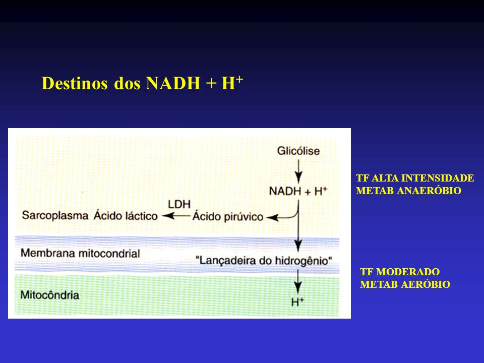 Destinos dos NADH + H+ TF ALTA INTENSIDADE METAB ANAERÓBIO TF MODERADO