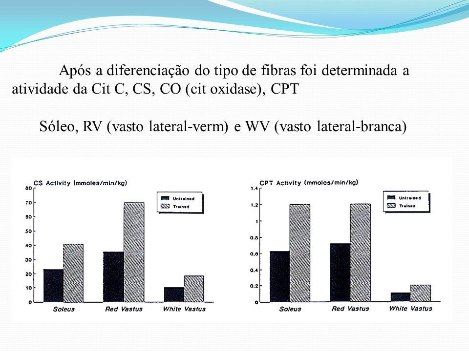 Após a diferenciação do tipo de fibras foi determinada a atividade da Cit C, CS, CO (cit oxidase), CPT