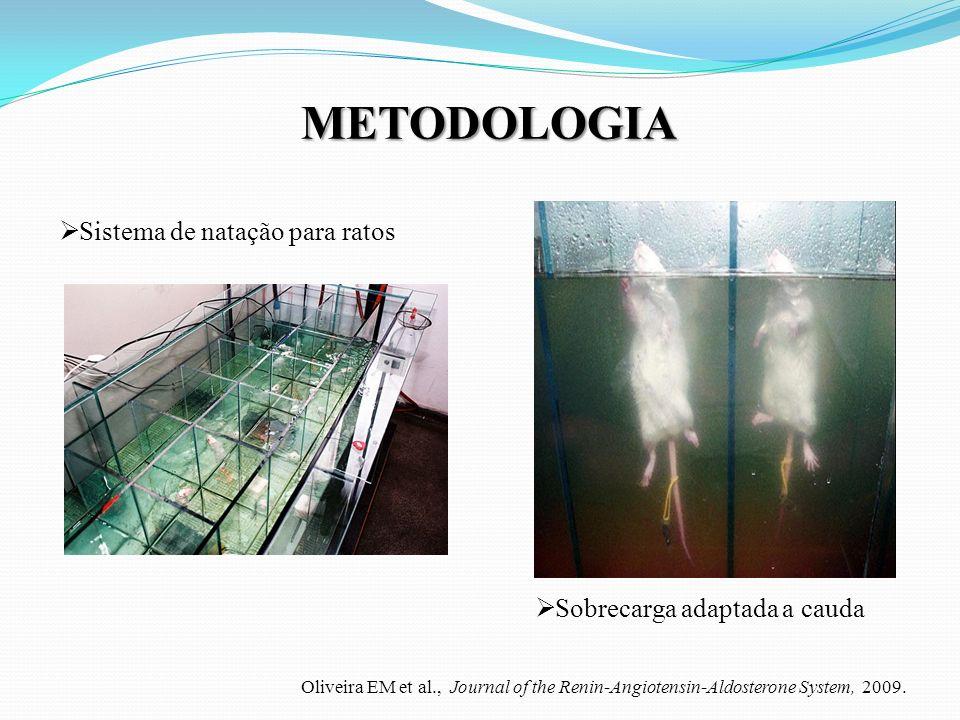 METODOLOGIA Sistema de natação para ratos Sobrecarga adaptada a cauda