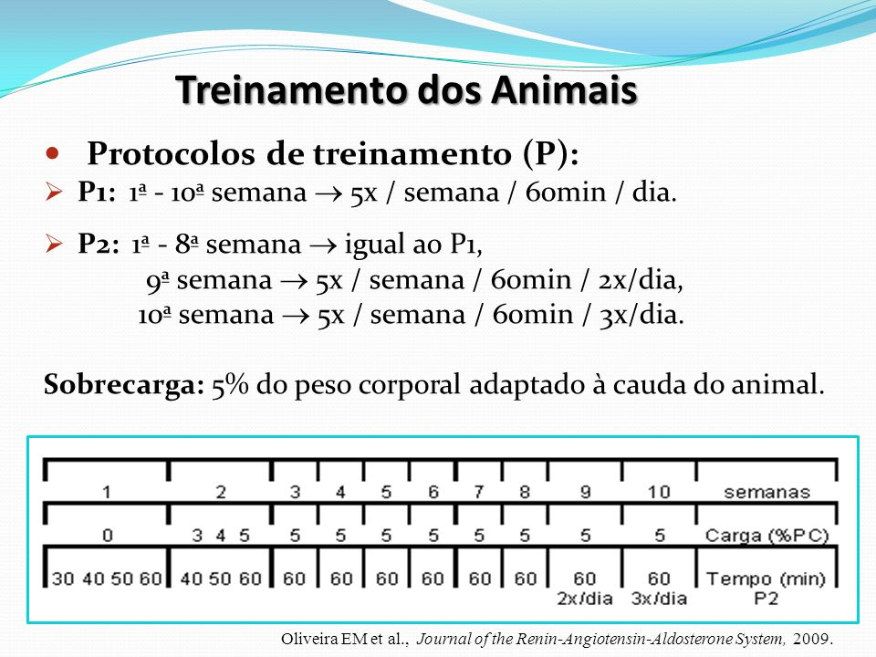 Treinamento dos Animais
