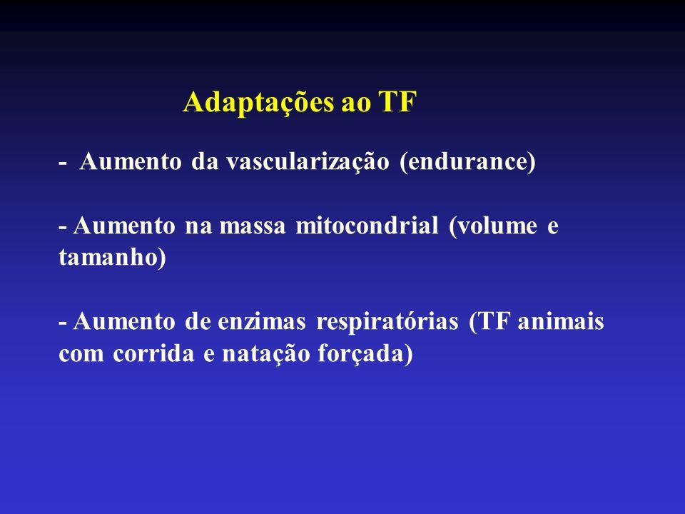 Adaptações ao TF - Aumento da vascularização (endurance)