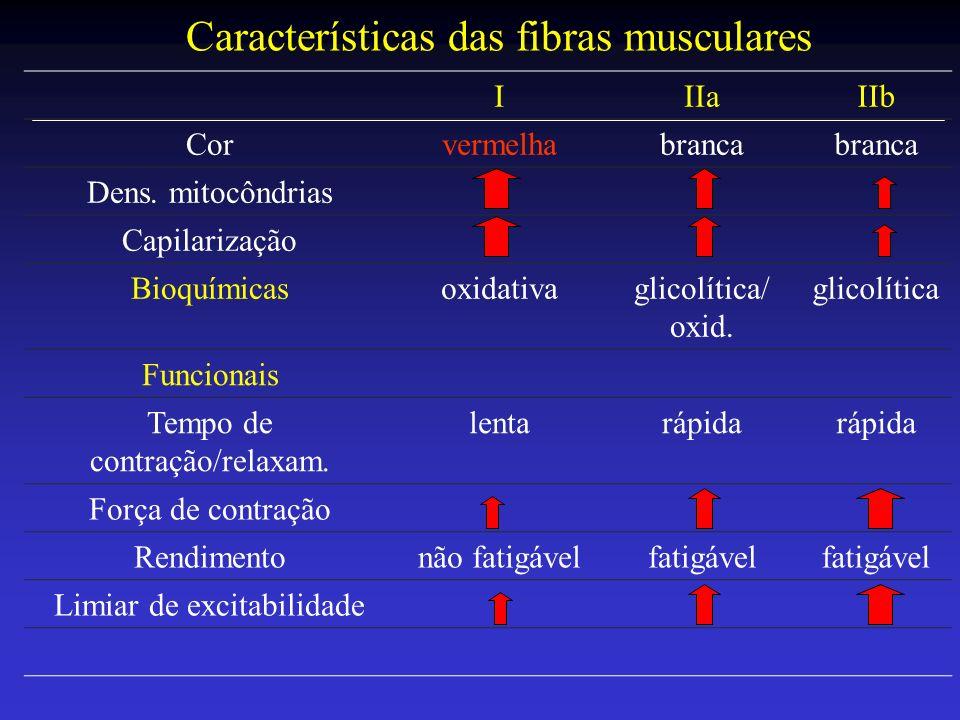 Características das fibras musculares