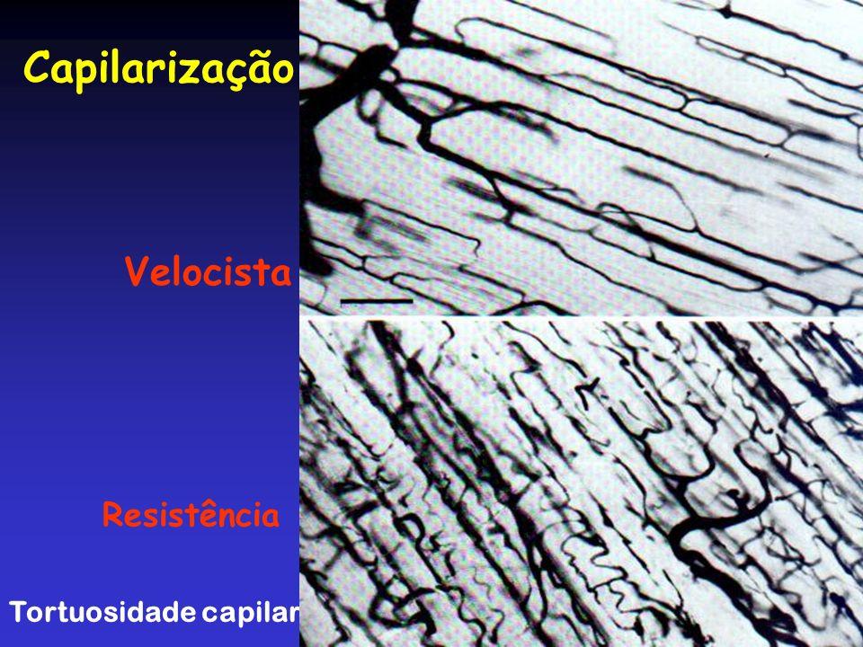 Capilarização Velocista Resistência Tortuosidade capilar