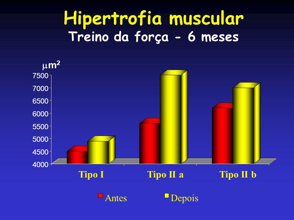 Hipertrofia muscular Treino da força - 6 meses