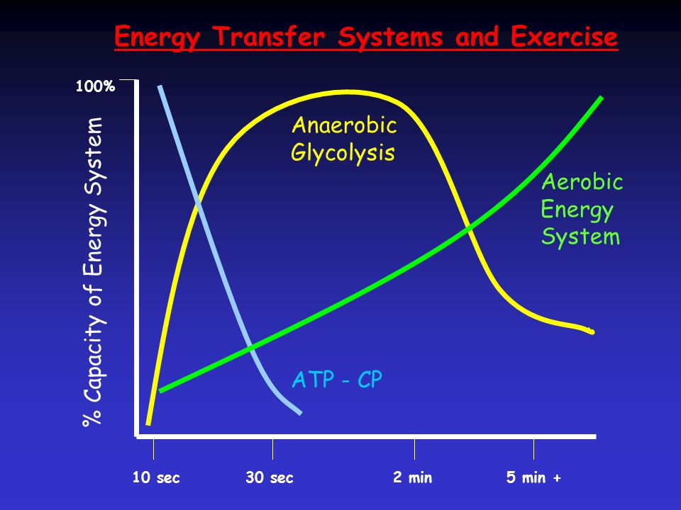 Energy Transfer Systems and Exercise