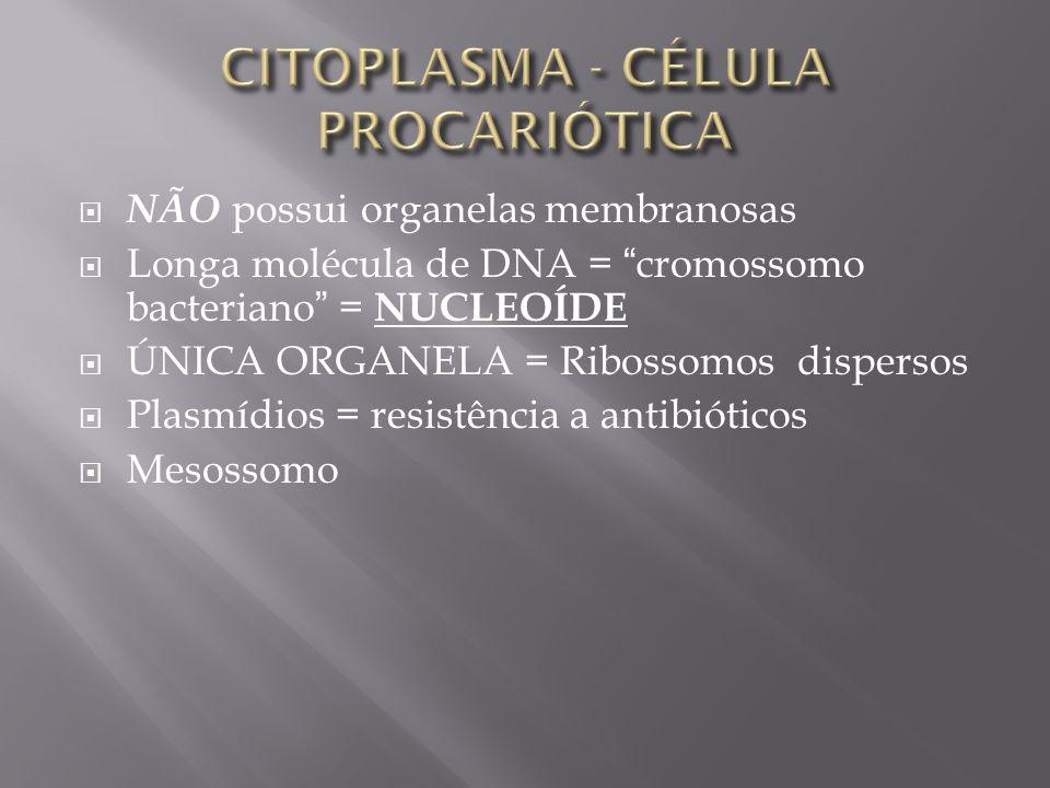 CITOPLASMA - CÉLULA PROCARIÓTICA