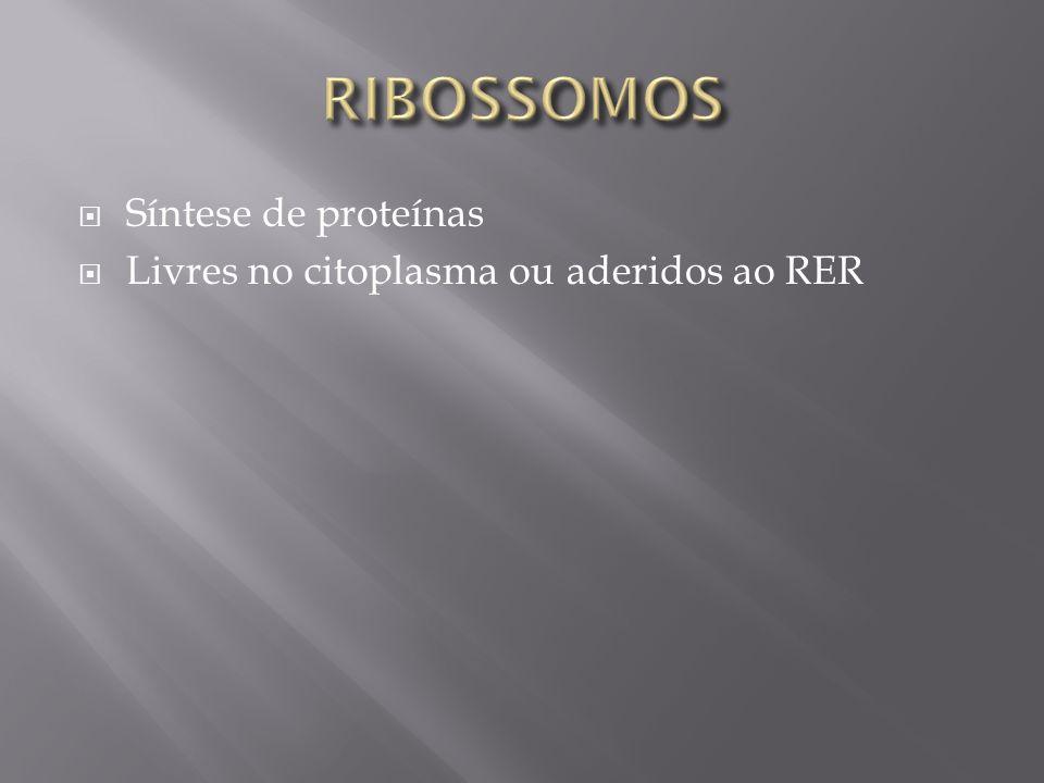 RIBOSSOMOS Síntese de proteínas