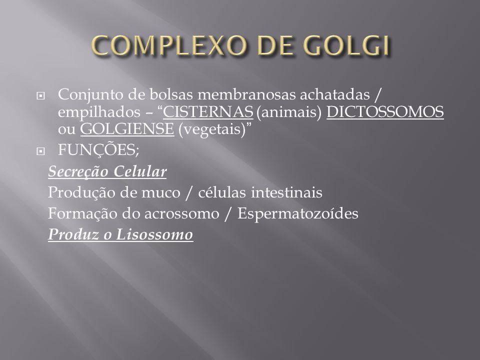 COMPLEXO DE GOLGI Conjunto de bolsas membranosas achatadas / empilhados – CISTERNAS (animais) DICTOSSOMOS ou GOLGIENSE (vegetais)