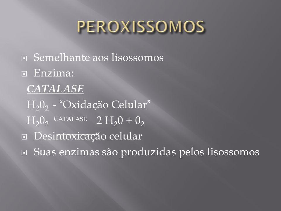 PEROXISSOMOS Semelhante aos lisossomos Enzima: CATALASE
