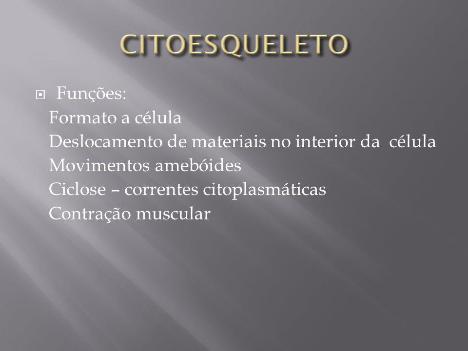 CITOESQUELETO Funções: Formato a célula