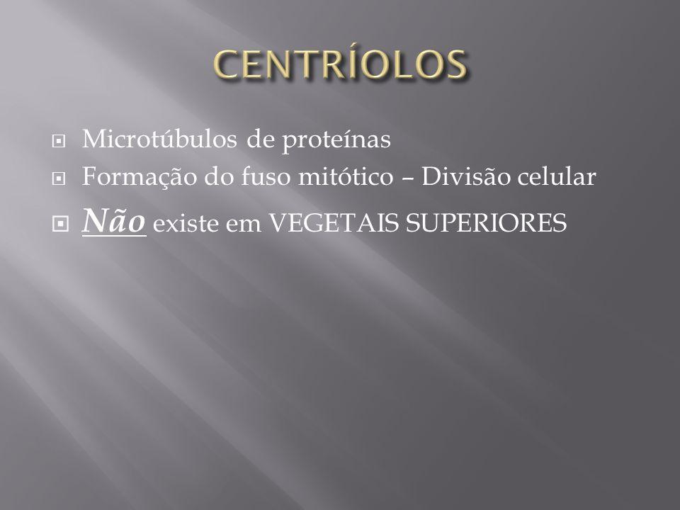 CENTRÍOLOS Não existe em VEGETAIS SUPERIORES Microtúbulos de proteínas