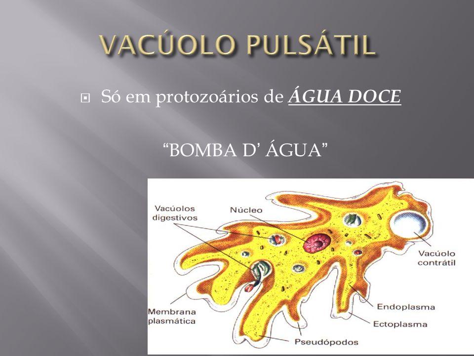 Só em protozoários de ÁGUA DOCE