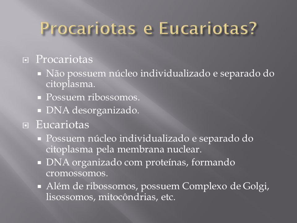 Procariotas e Eucariotas