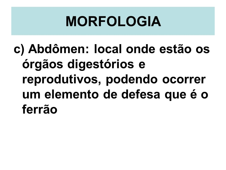 MORFOLOGIA c) Abdômen: local onde estão os órgãos digestórios e reprodutivos, podendo ocorrer um elemento de defesa que é o ferrão.