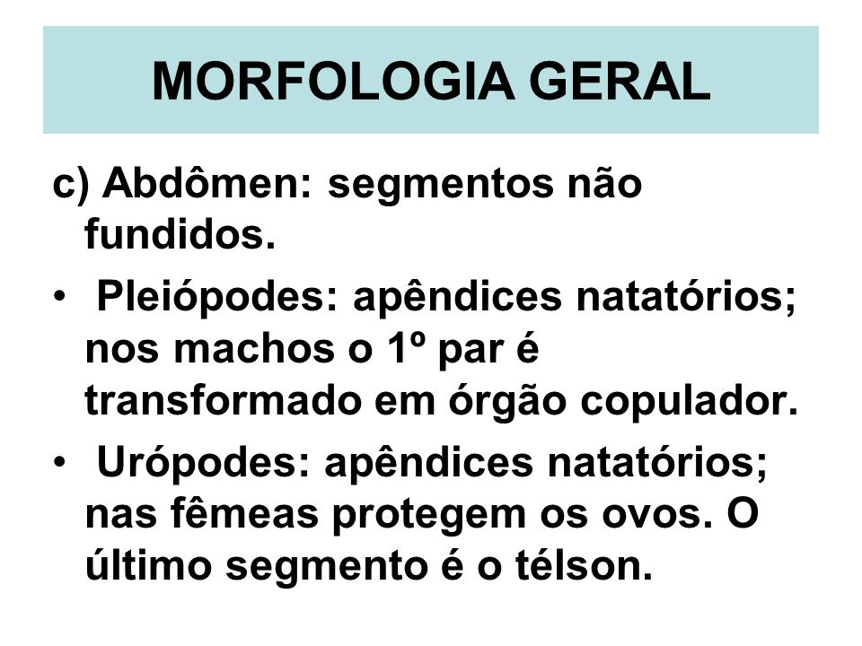 MORFOLOGIA GERAL c) Abdômen: segmentos não fundidos.