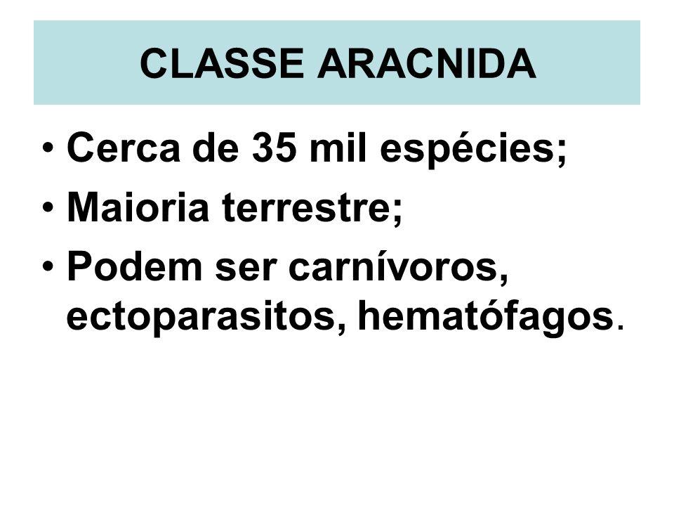 CLASSE ARACNIDACerca de 35 mil espécies; Maioria terrestre; Podem ser carnívoros, ectoparasitos, hematófagos.