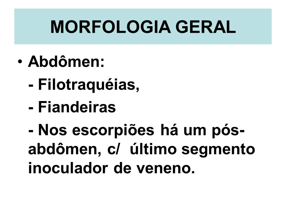 MORFOLOGIA GERAL Abdômen: - Filotraquéias, - Fiandeiras