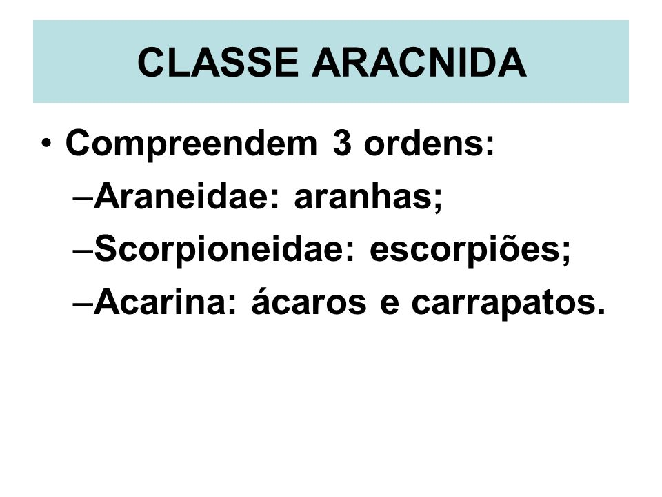 CLASSE ARACNIDA Compreendem 3 ordens: Araneidae: aranhas;