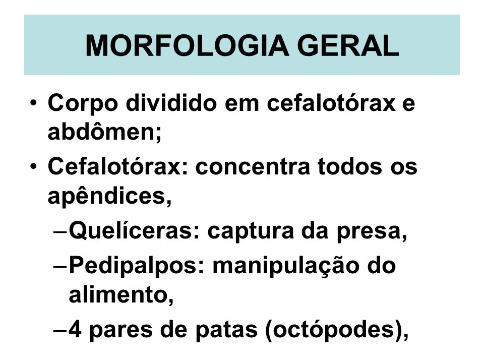 MORFOLOGIA GERAL Corpo dividido em cefalotórax e abdômen;