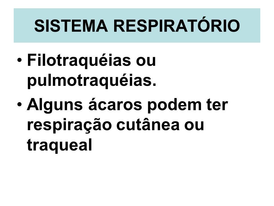 SISTEMA RESPIRATÓRIO Filotraquéias ou pulmotraquéias.