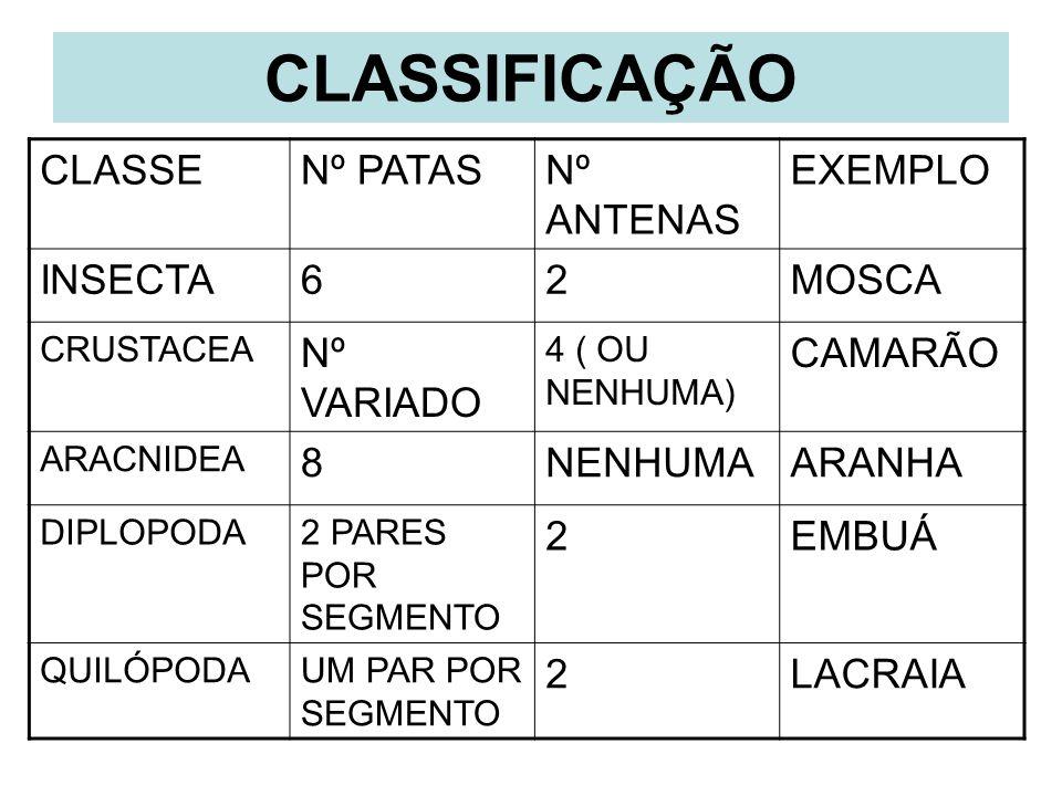 CLASSIFICAÇÃO CLASSE Nº PATAS Nº ANTENAS EXEMPLO INSECTA 6 2 MOSCA
