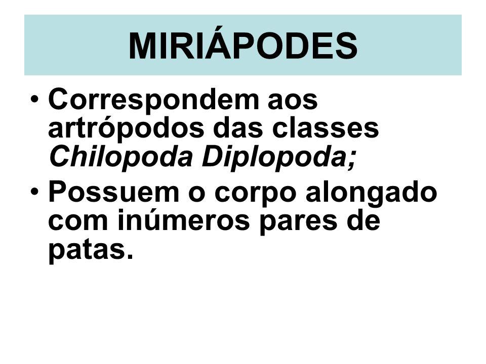 MIRIÁPODESCorrespondem aos artrópodos das classes Chilopoda Diplopoda; Possuem o corpo alongado com inúmeros pares de patas.