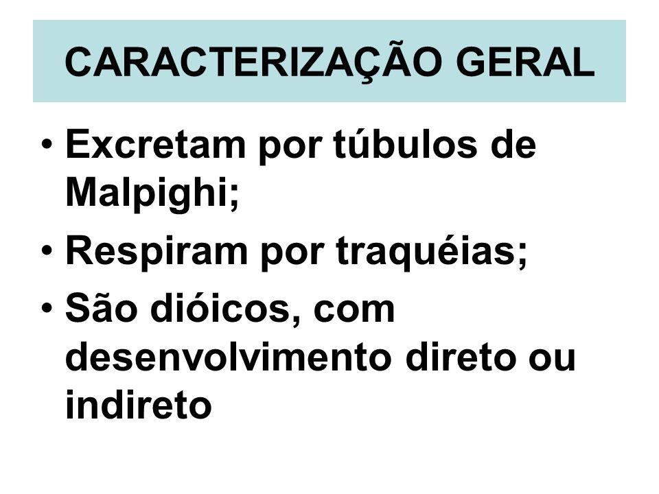 CARACTERIZAÇÃO GERALExcretam por túbulos de Malpighi; Respiram por traquéias; São dióicos, com desenvolvimento direto ou indireto.
