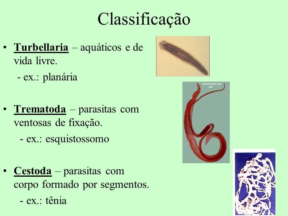 Classificação Turbellaria – aquáticos e de vida livre. - ex.: planária