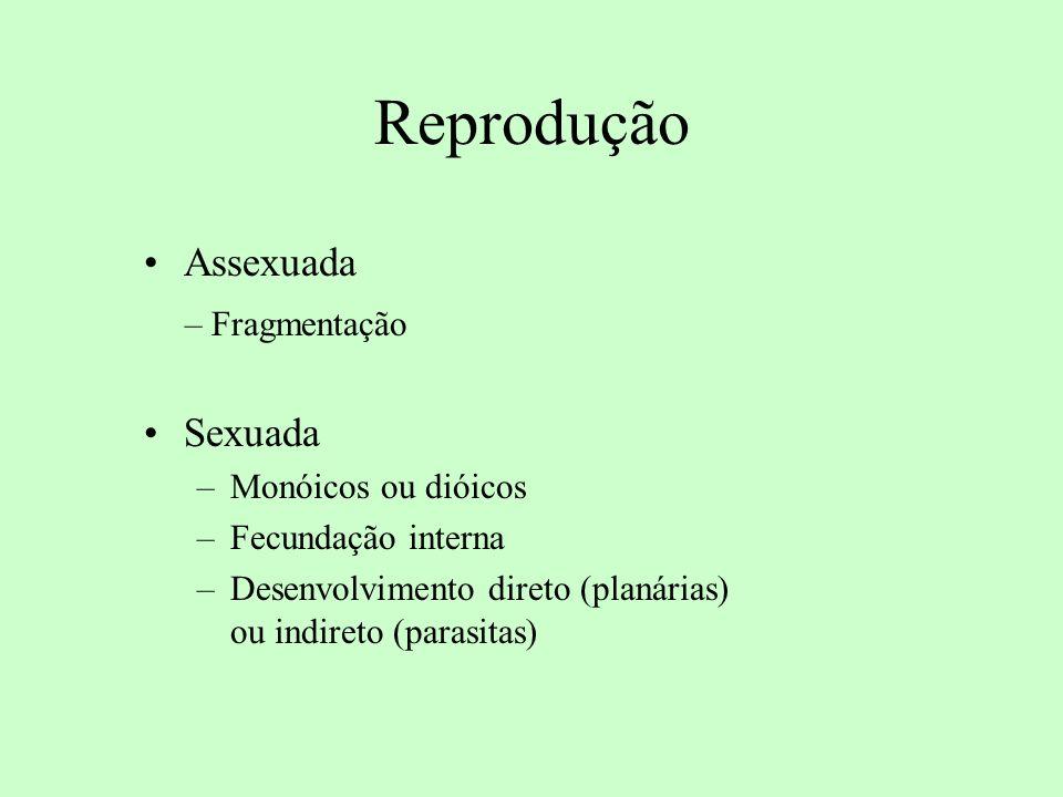 Reprodução Assexuada – Fragmentação Sexuada Monóicos ou dióicos