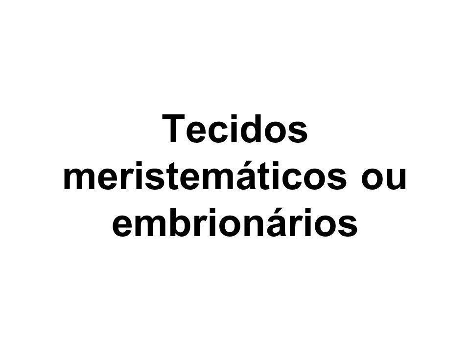 Tecidos meristemáticos ou embrionários