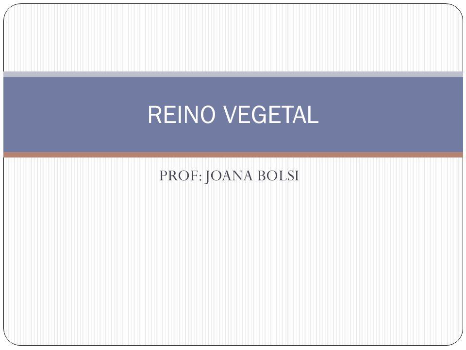 REINO VEGETAL PROF: JOANA BOLSI