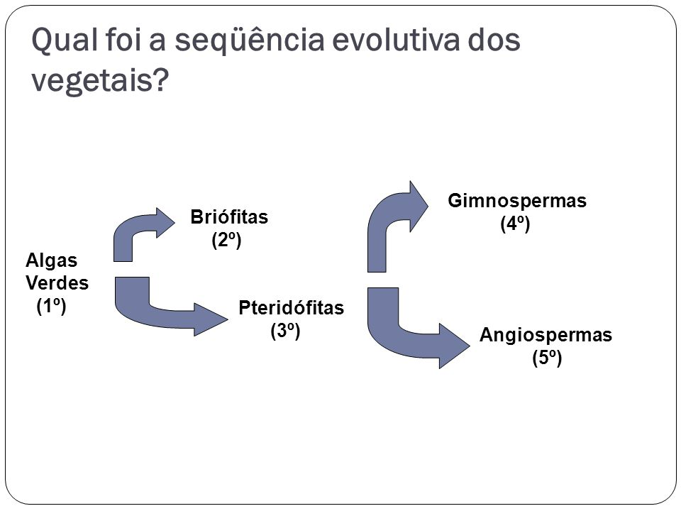 Qual foi a seqüência evolutiva dos vegetais
