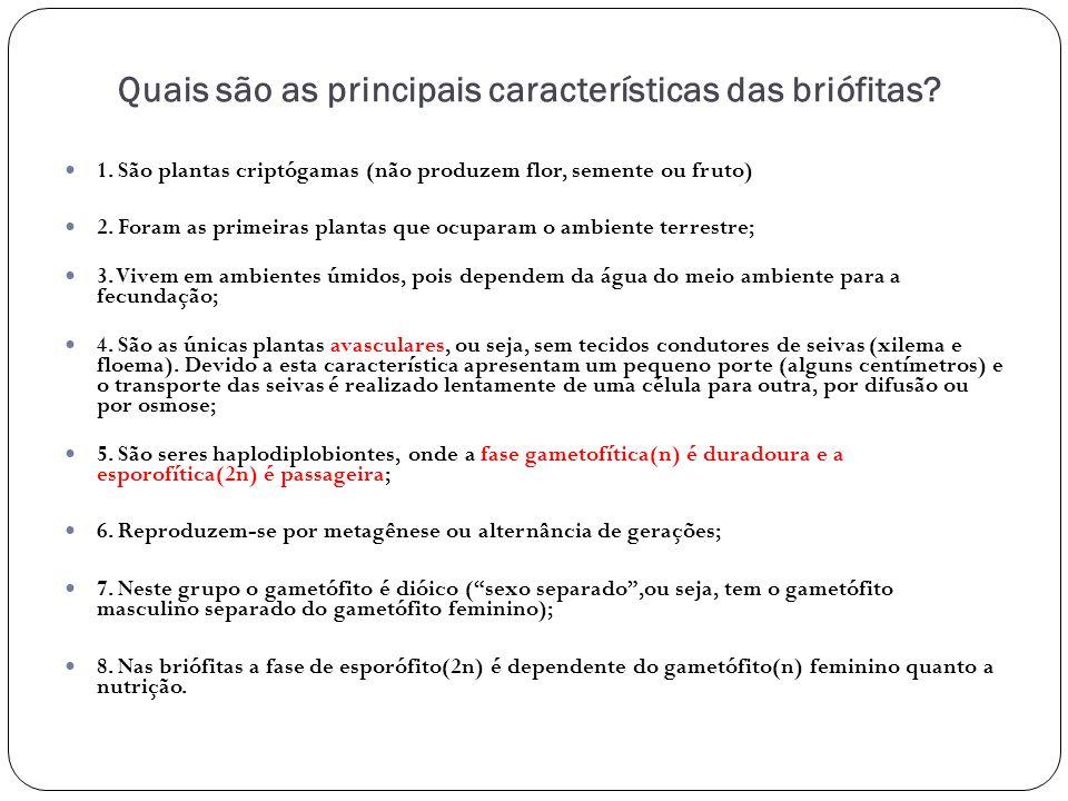 Quais são as principais características das briófitas